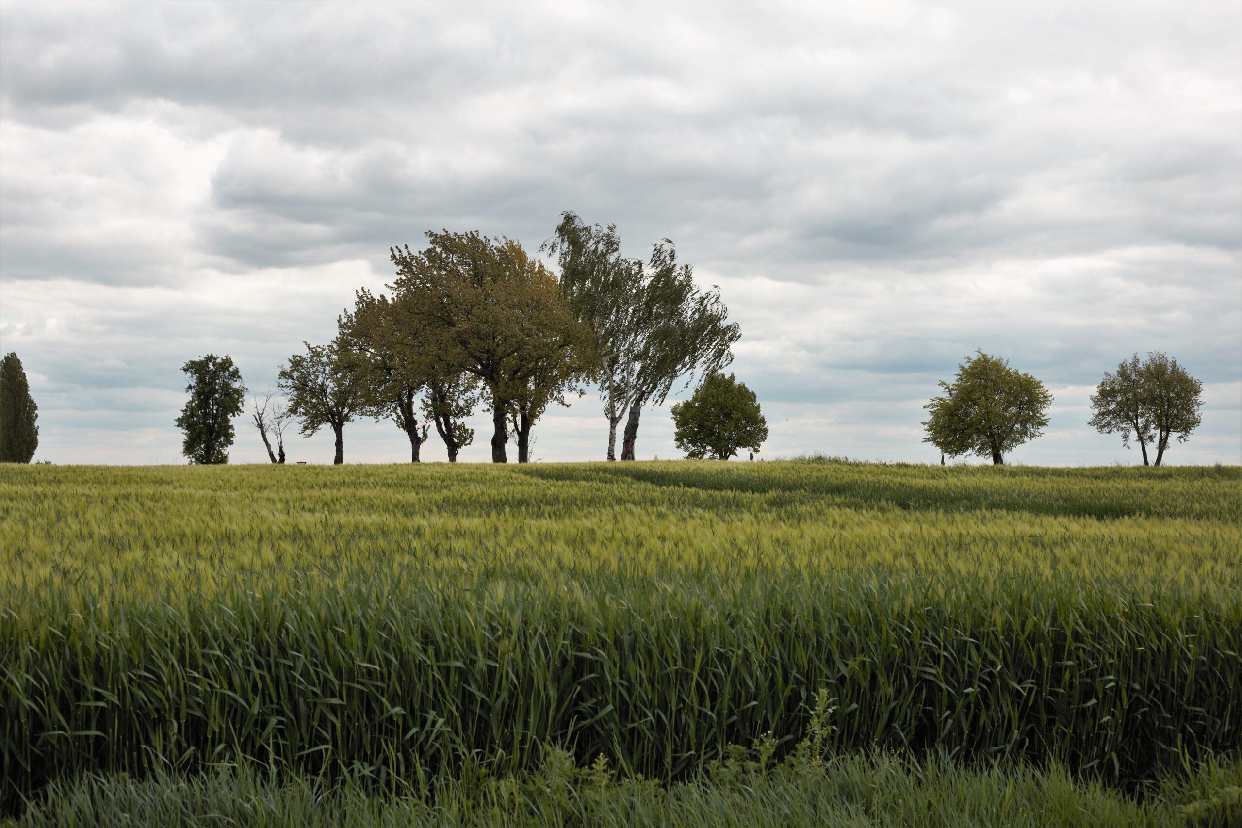 Agrarunternehmen Lommatzscher Pflege e.G.: Aus der Region, für die Region