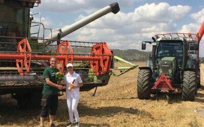 Die Ernte 2020 hat begonnen: Weizen aus Dresden Gohlis erreicht die Mühle