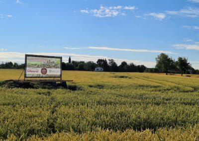 Das Schild findet sich direkt auf einem Getreidefeld in der Nähe von Bennewitz.