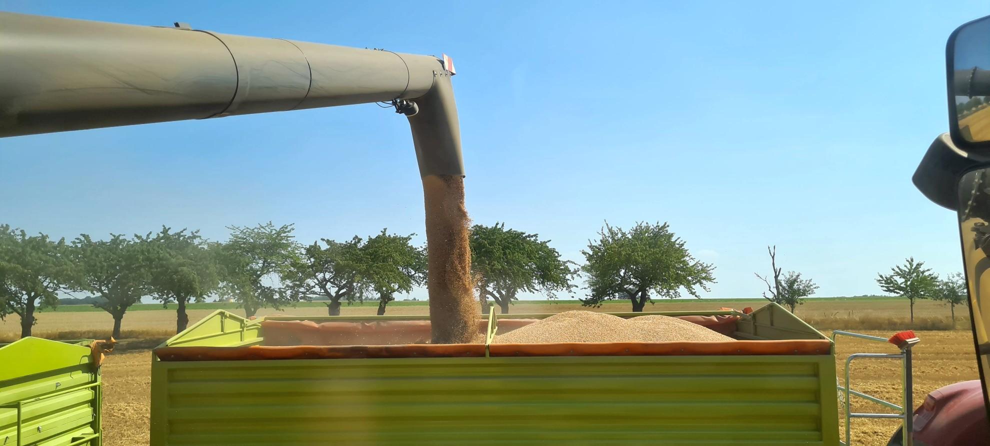 Das Abbunkern ist Präzisionsarbeit während der Ernte.