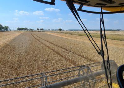 Blick aus der Fahrerkabine aufs Feld.